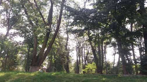 Dendrologic Park
