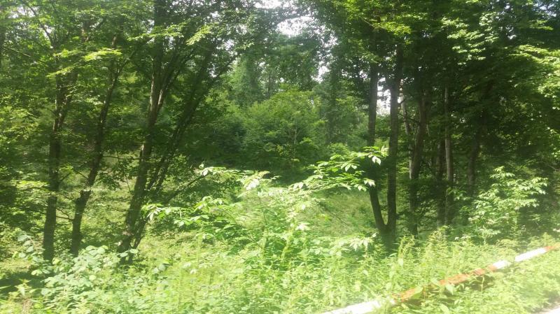 Sloboda forest