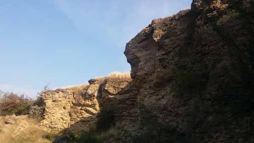 Place fossils Dealul Repedea
