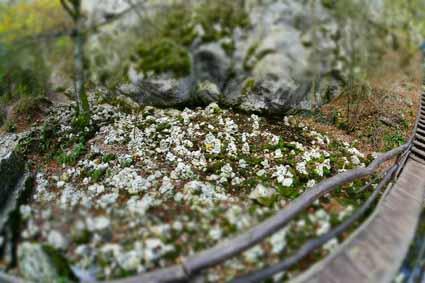 Bigar Spring