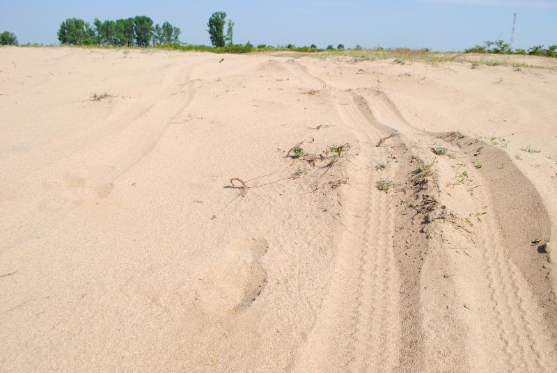 Dabuleni dunes