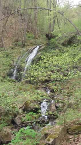 Sasului Water Fall