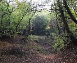 Drocaia Forest