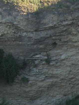 Place fossils Cozla