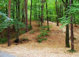 Trivale Forest