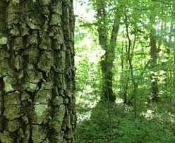 Bazos Arboretum Nature Reserve