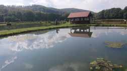 Campu Cetatii Trout Stream