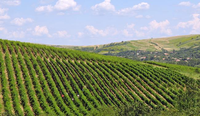 Vie Vin Vinju Mare