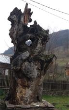 Kannásné Tree