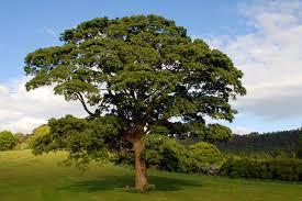 Orban Balasz Oak