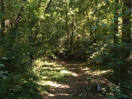Dendrological Park Sacueni