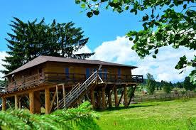 Mountain cottage tree